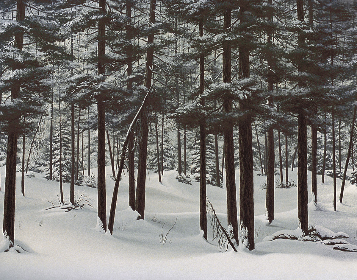 Stock Photo Landscape Of Deep Snowy Woods With Snow Covered Trees